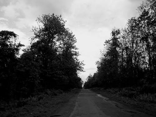 Безкоштовне стокове фото на тему «Індія, вродлива, діва земля, дерева»