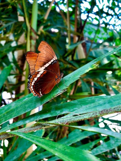 橙色的蝴蝶, 綠葉, 蝴蝶 的 免費圖庫相片