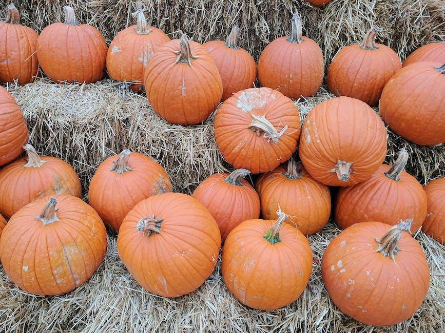 pumpkin lot on hay