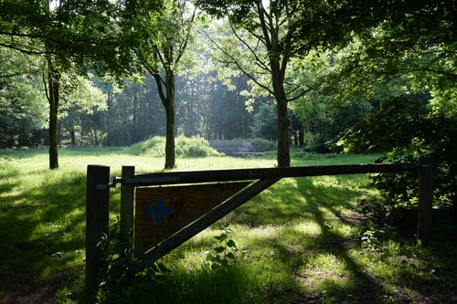 Brown Wooden Fence Near Green Trees