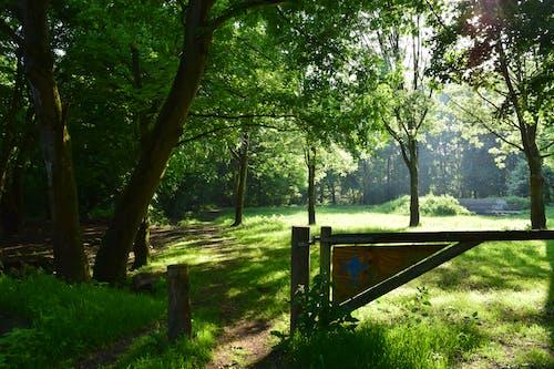 Brown Wooden Bench on Green Grass Field