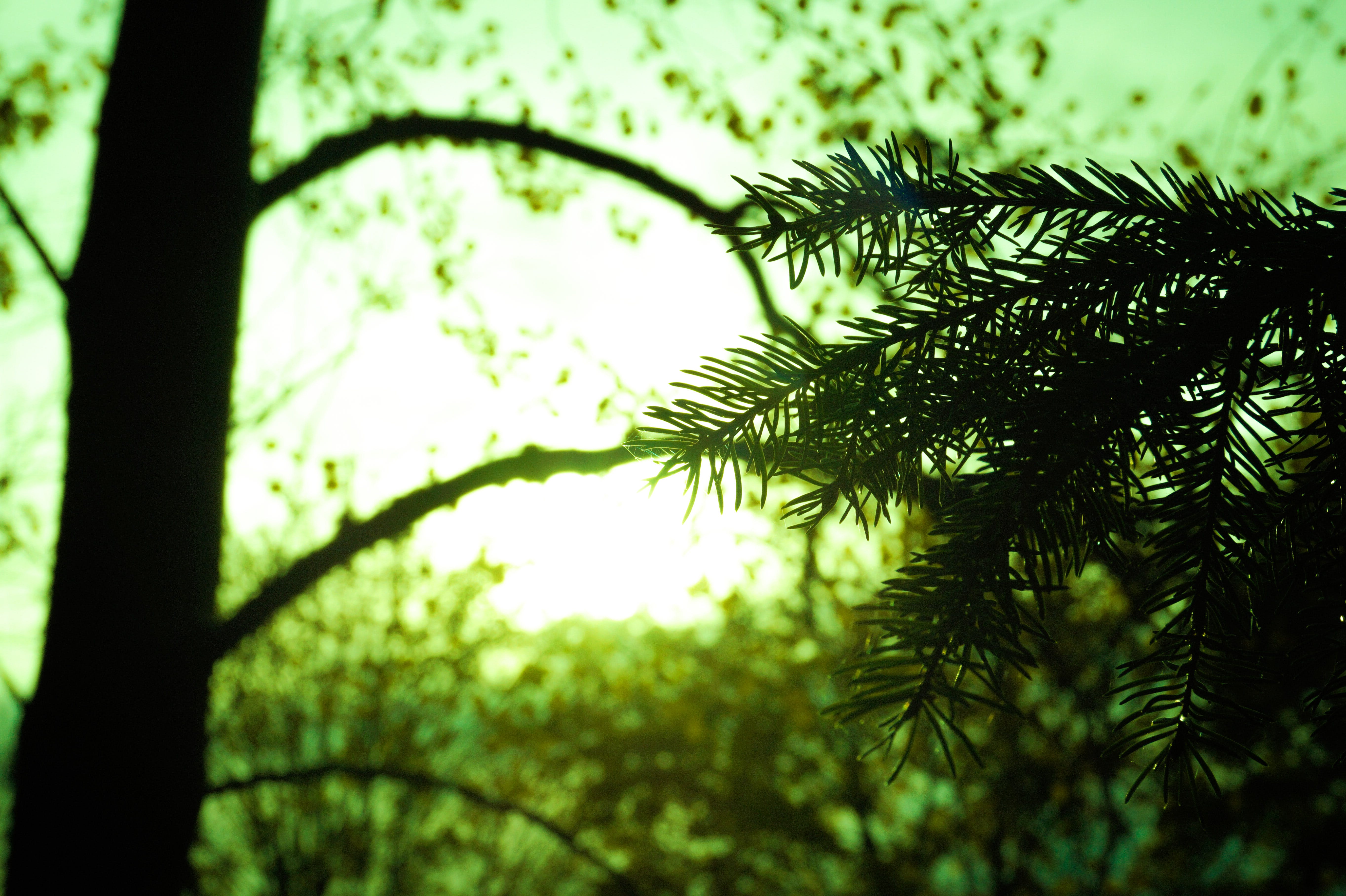Silhouette of Tree Leaf on Green Background