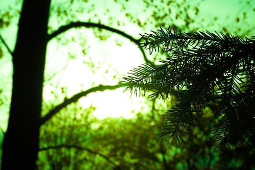 Foto stok gratis alam, cabang, hutan, kebun