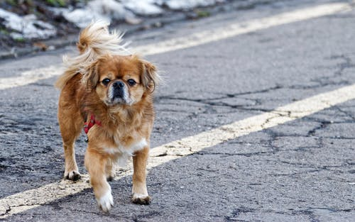 Kostnadsfri bild av asfalt, brun, däggdjur, djur