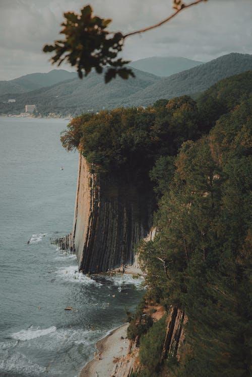 나무, 바다, 빗나가서의 무료 스톡 사진