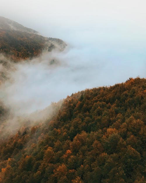 Bird's Eye Photography of Foggy Forest