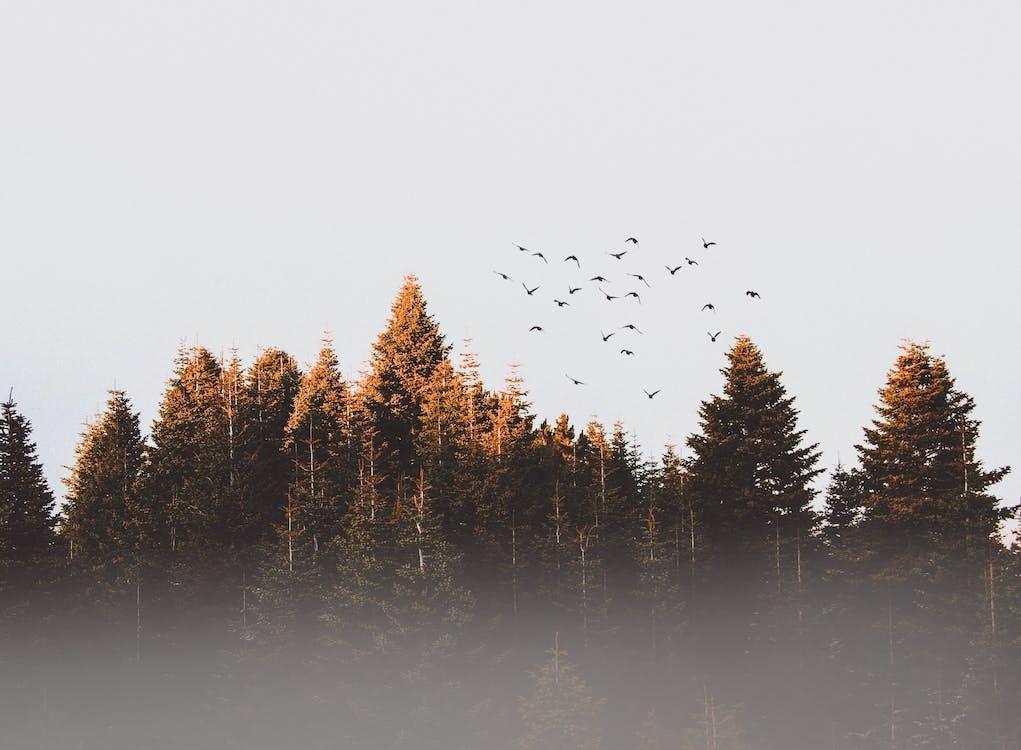 årstid, bartre, daggry