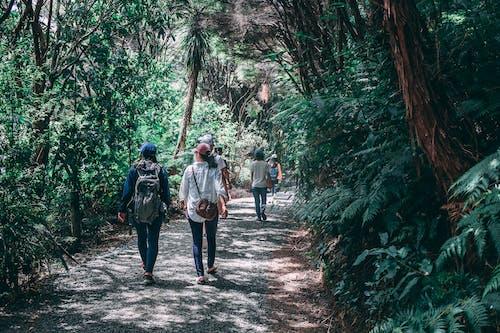 Foto stok gratis backpacker, hutan, jalur, jejak
