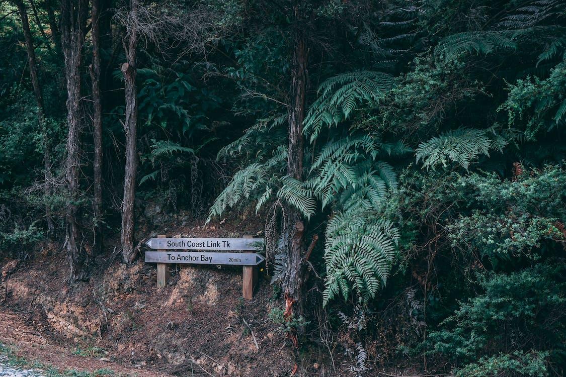 kasvu, luonnollinen, luonto
