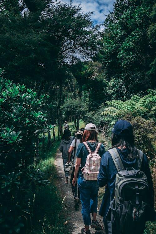 Kostnadsfri bild av äventyr, backpacker, bana, dagsljus