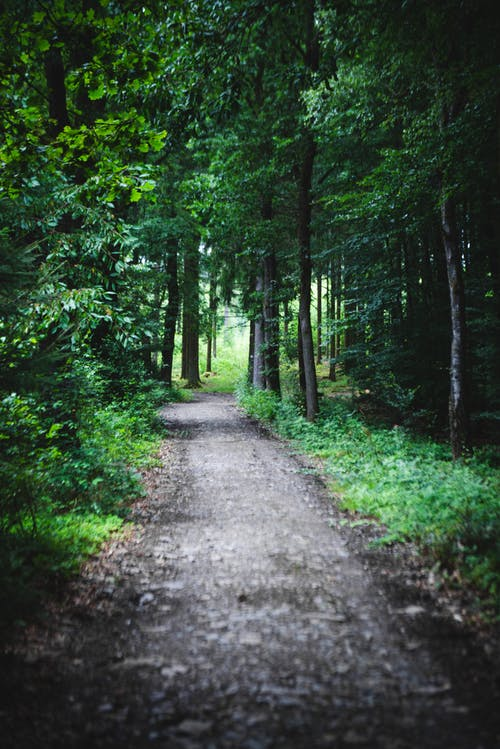 Free stock photo of 4k background, background, forest