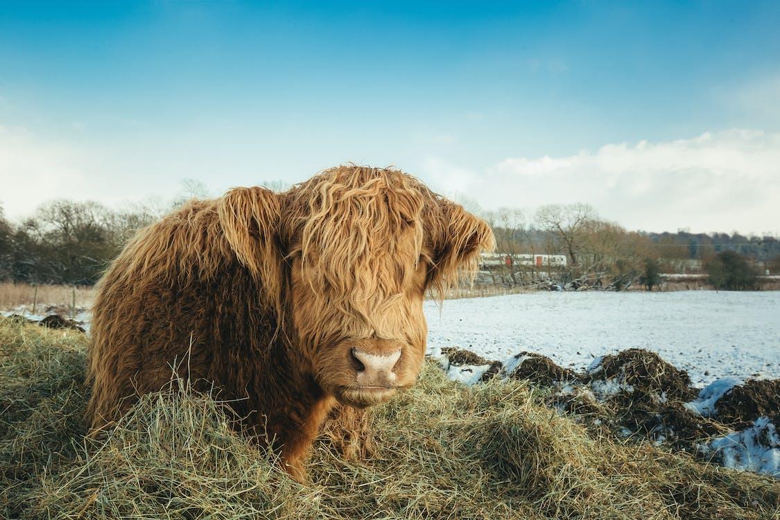 가축, 낮, 농장
