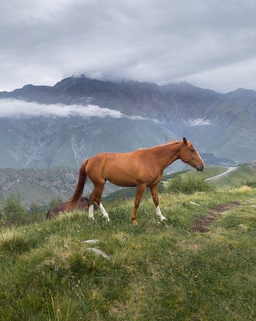 Brown Horse on a Grass Field Near Mountains