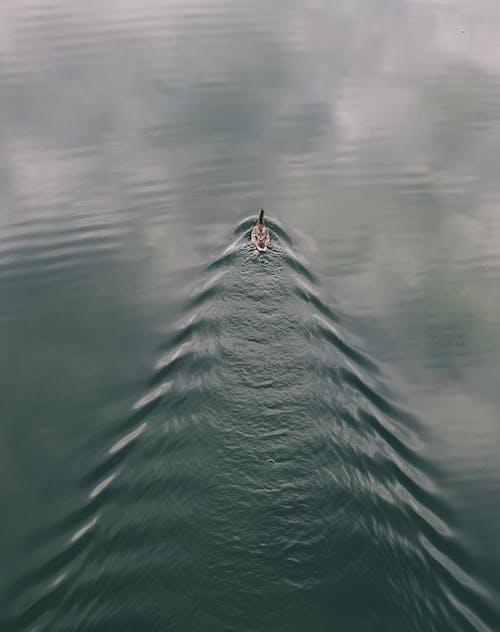 Základová fotografie zdarma na téma čeření, cestování, divočina