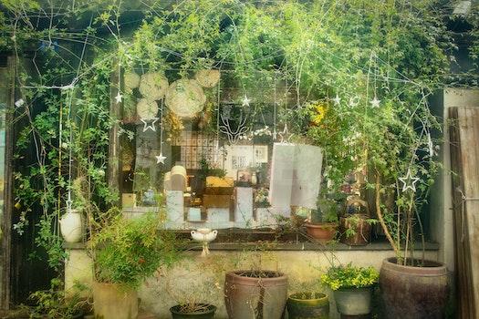 Free stock photo of 植物, 风景, 街拍, 城市