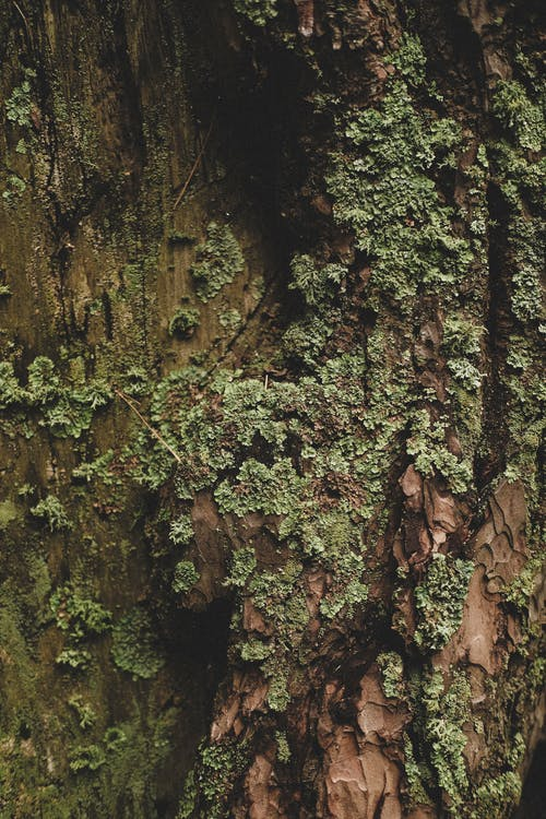 Green Moss on Wood