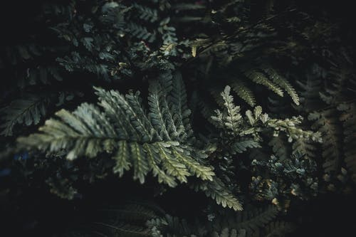 Green Fern Leaves in Close Up Photography