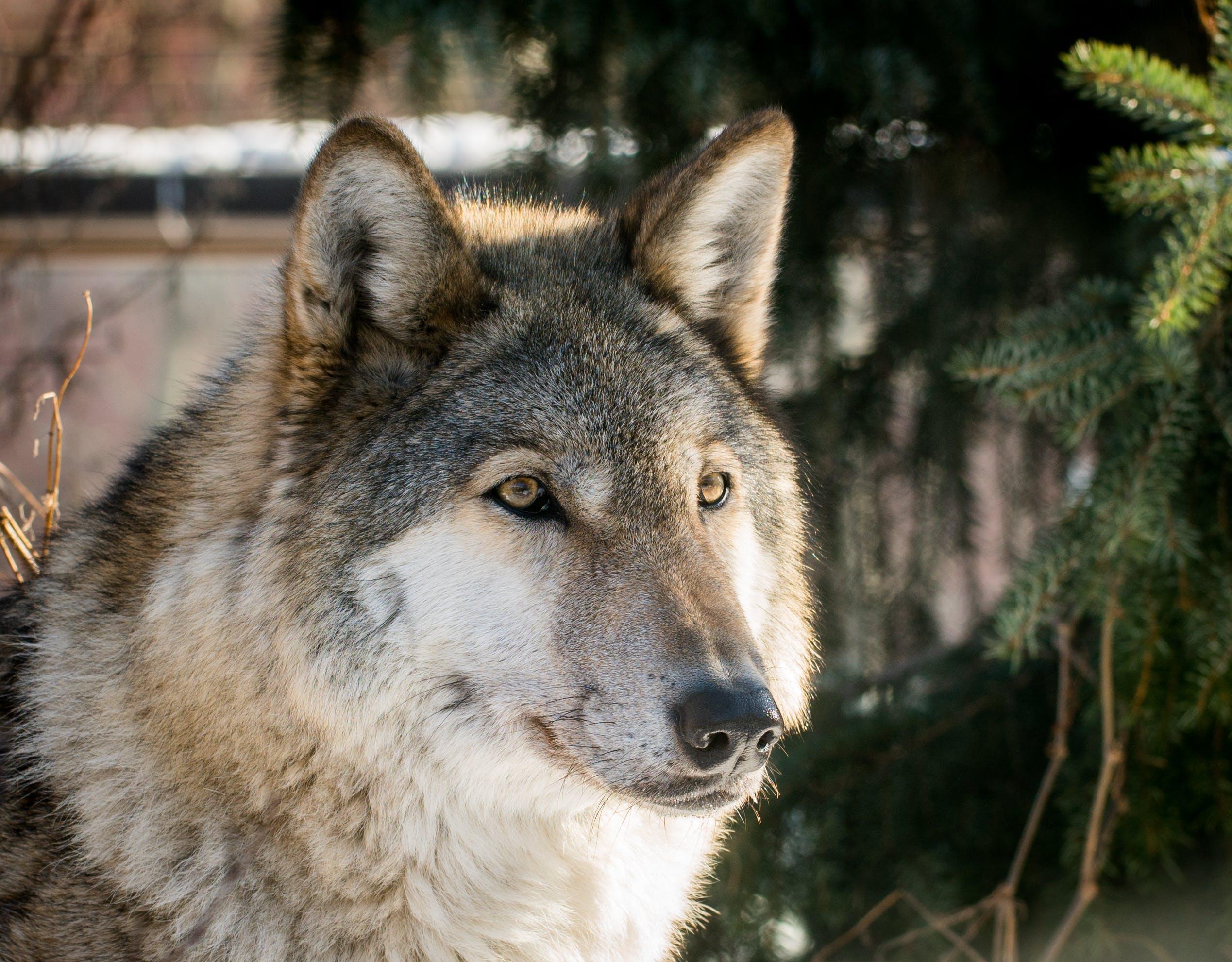 fotografování zvířat, kožešina, pes