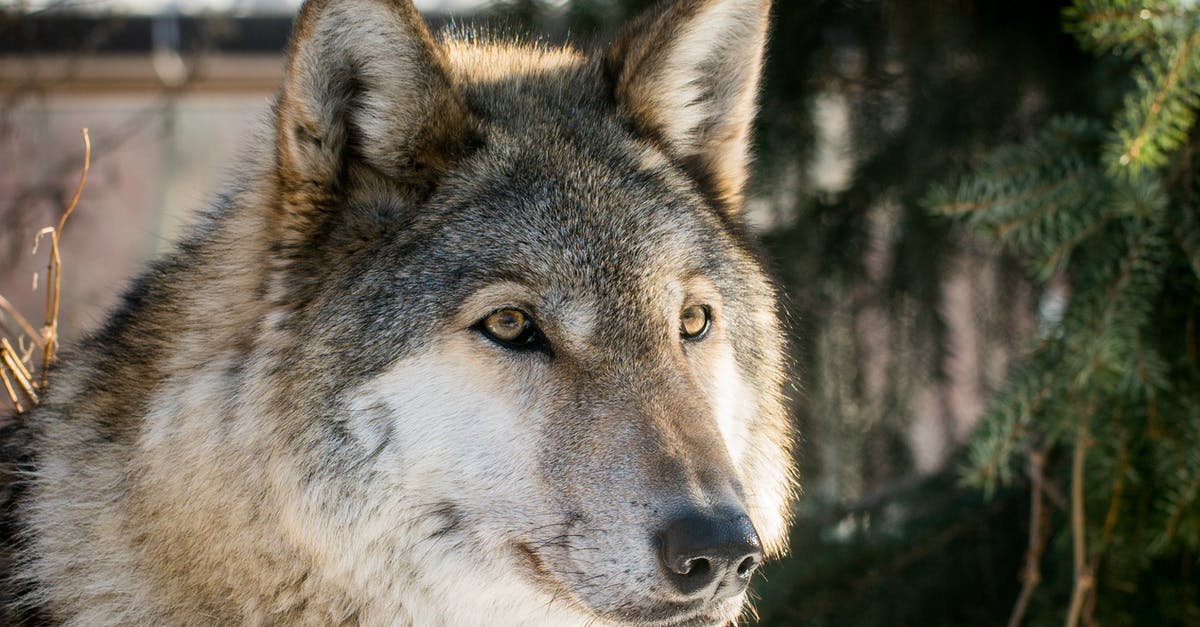 любить добрый волк фото клубе