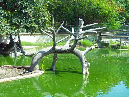 Ingyenes stockfotó állatkert, havanna, Kuba témában
