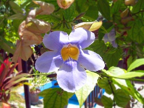Ingyenes stockfotó gyönyörű virágok témában