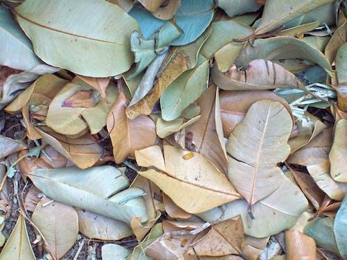 Ingyenes stockfotó száraz levelek témában