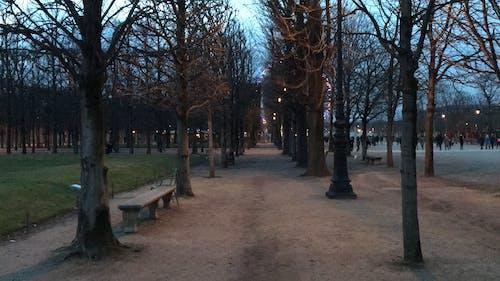 Free stock photo of city park, night, paris