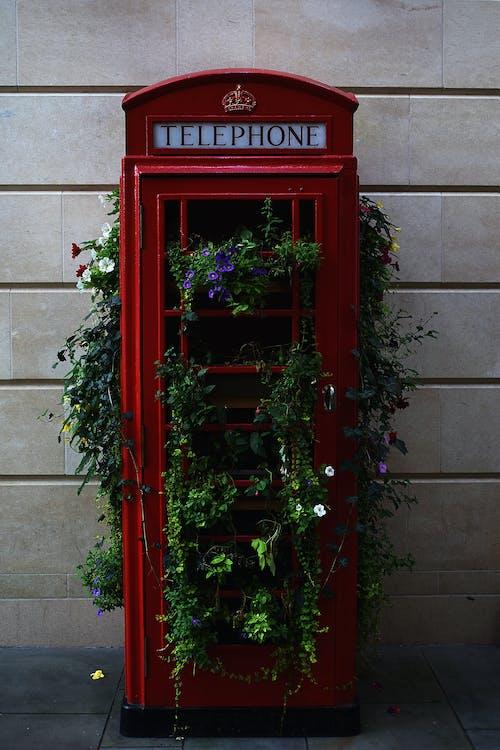 Kostnadsfri bild av anläggning, blomma, grön, klassisk