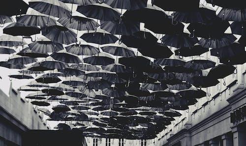 Black Umbrella Lot