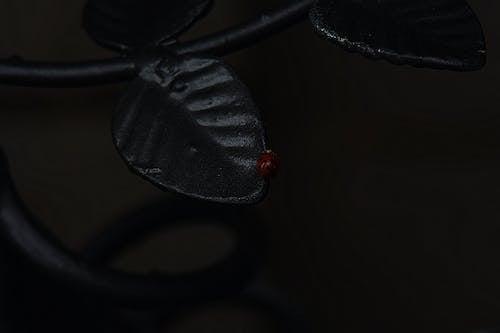 Free stock photo of bug, dark, ladybug, metal