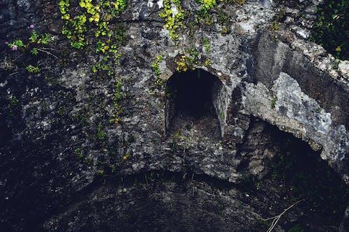 Darmowe zdjęcie z galerii z natura, opuszczony, opuszczony budynek, roślina