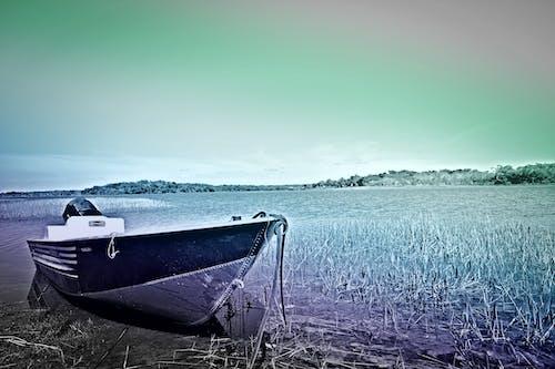 Безкоштовне стокове фото на тему «колір, мистецтво, небо, очерет»
