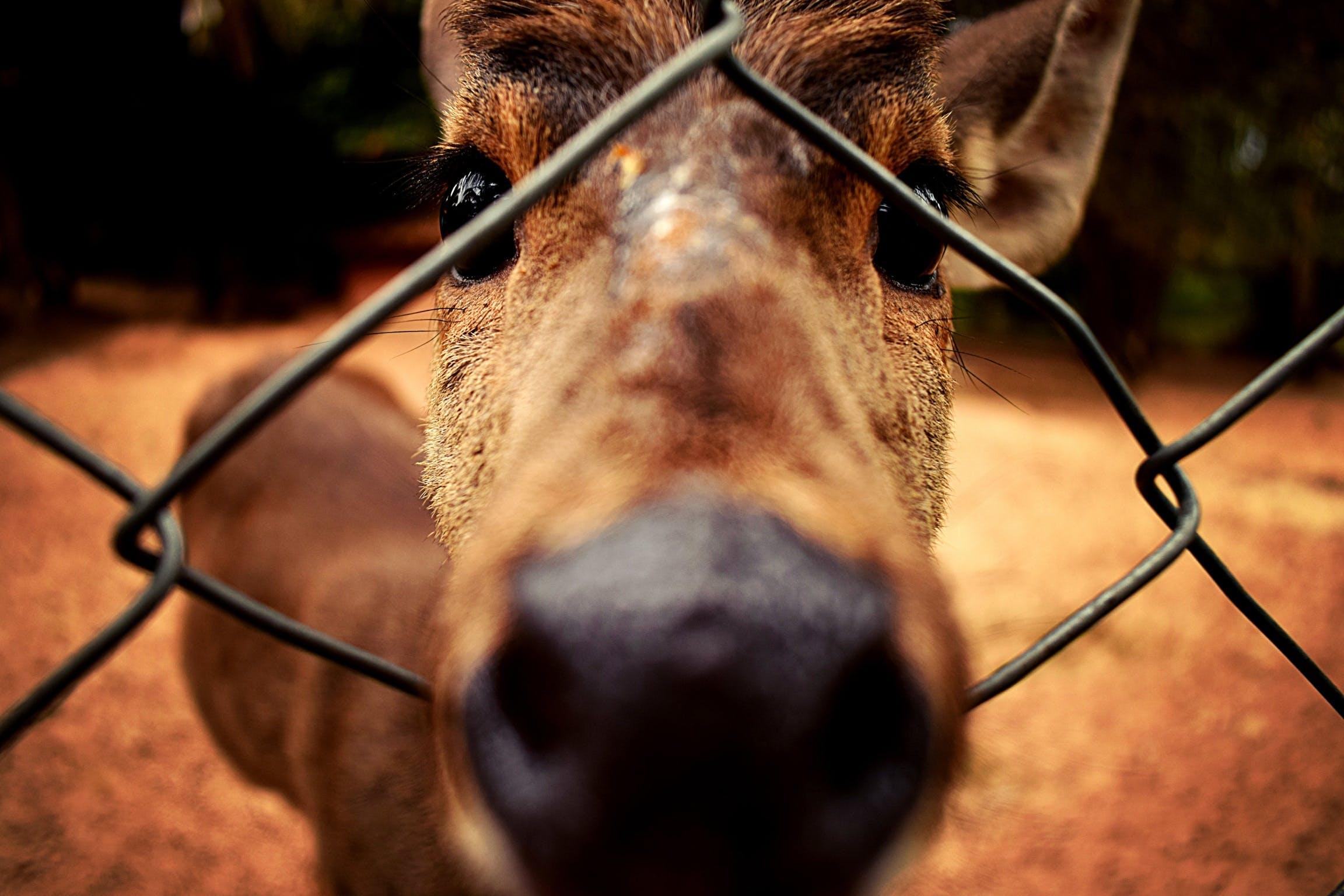 Foto d'estoc gratuïta de a prop, animal, cérvol, enganxat