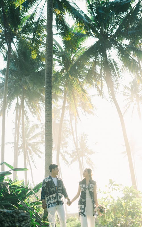 Foto profissional grátis de ao ar livre, árvore, coco