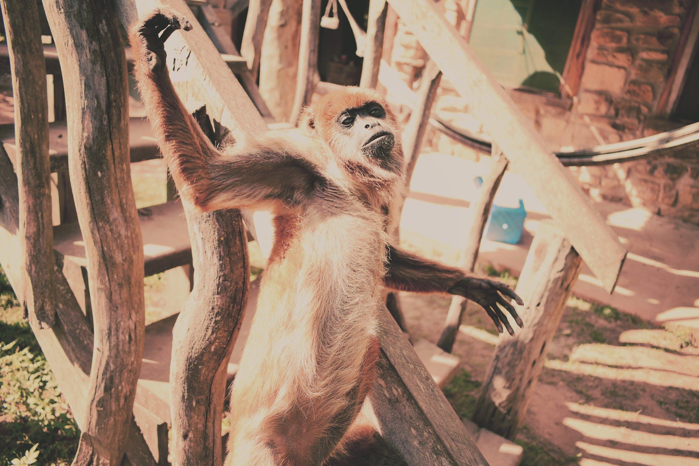Foto d'estoc gratuïta de animals, colors freds, divertit, jungla