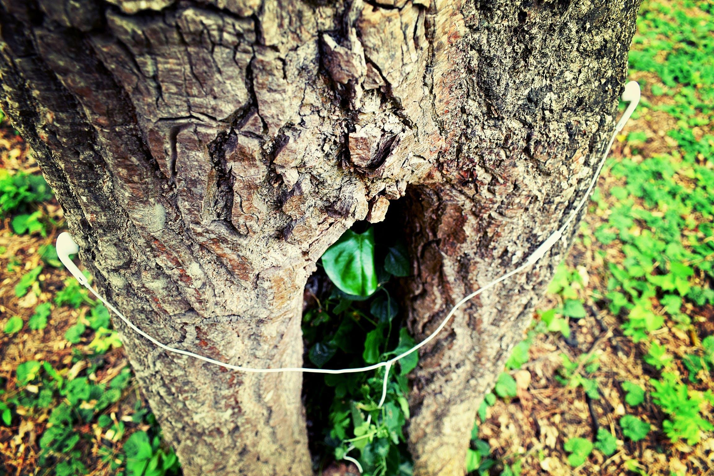 Foto d'estoc gratuïta de arbre, auriculars, creatiu, escoltar