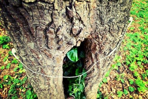 Безкоштовне стокове фото на тему «грін піс, дерево, заводи, зелений»