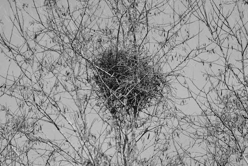 Photos gratuites de arbres, nature, nid, oiseaux