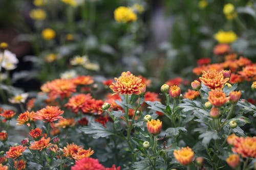 Photography of Orange, Red, and White Petaled Flower Field