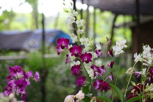 Gratis arkivbilde med årstid, blad, blomster, blomsterblad