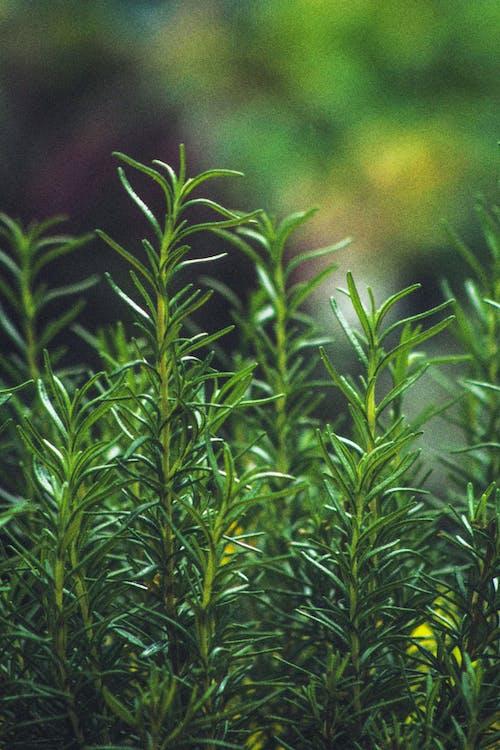 Imagine de stoc gratuită din arbori veșnic verzi, atmosferă sumbră, centrale