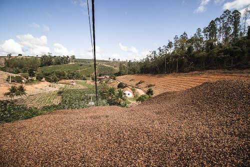 Foto d'estoc gratuïta de a l'aire lliure, agricultura, arbre