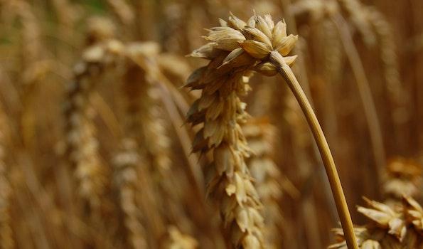 Beige Plant Photo