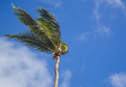 Coconut Tree Under White Clouds at Daytime
