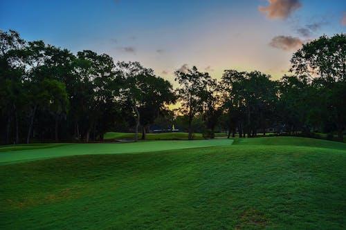 Бесплатное стоковое фото с газон, деревья, дневной свет, живописный