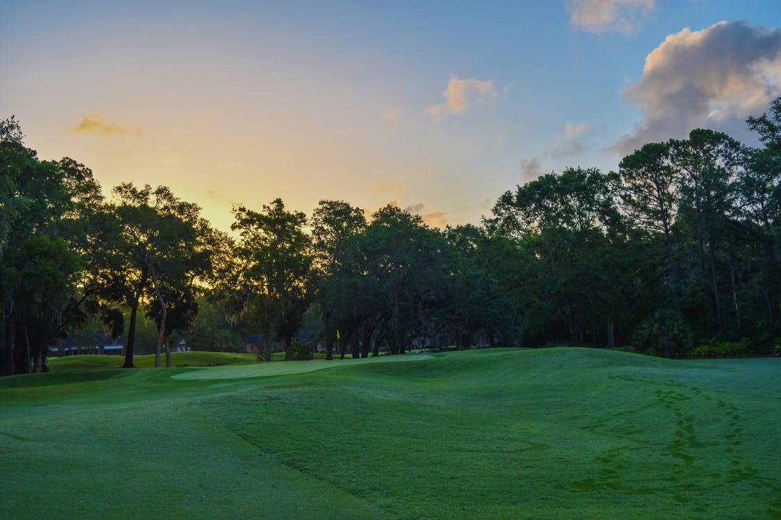 гольф, деревья, дневной свет