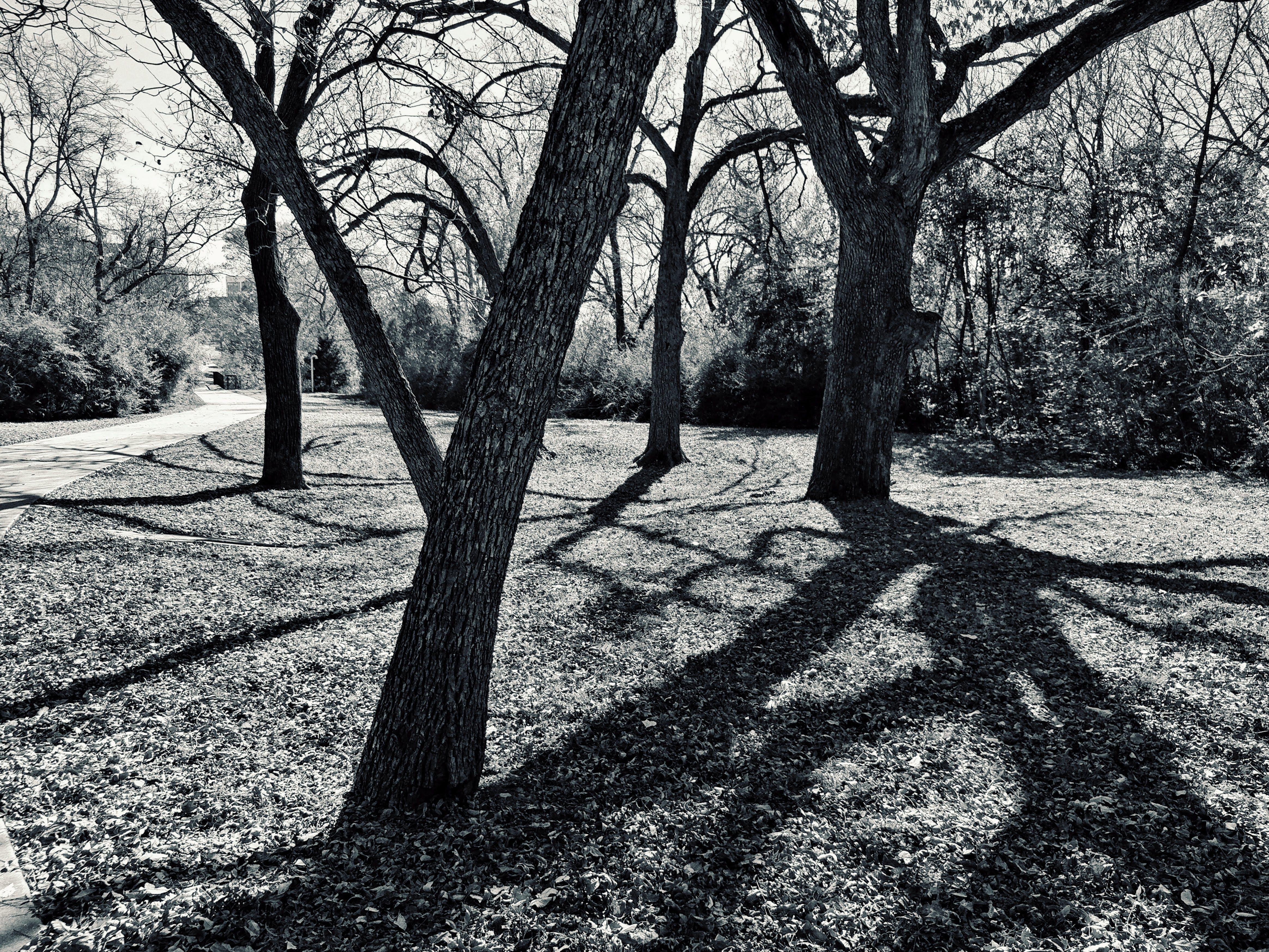 Безкоштовне стокове фото на тему «імла, відділення, вказівки, дерева»