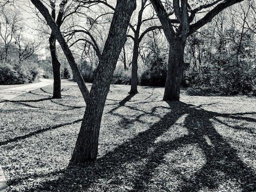 Gratis arkivbilde med årstid, aveny, blader, falle