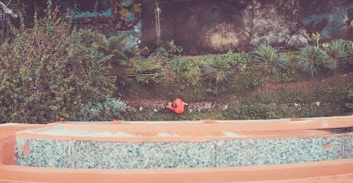 Foto stok gratis biarawan, chiang mai, Thailand