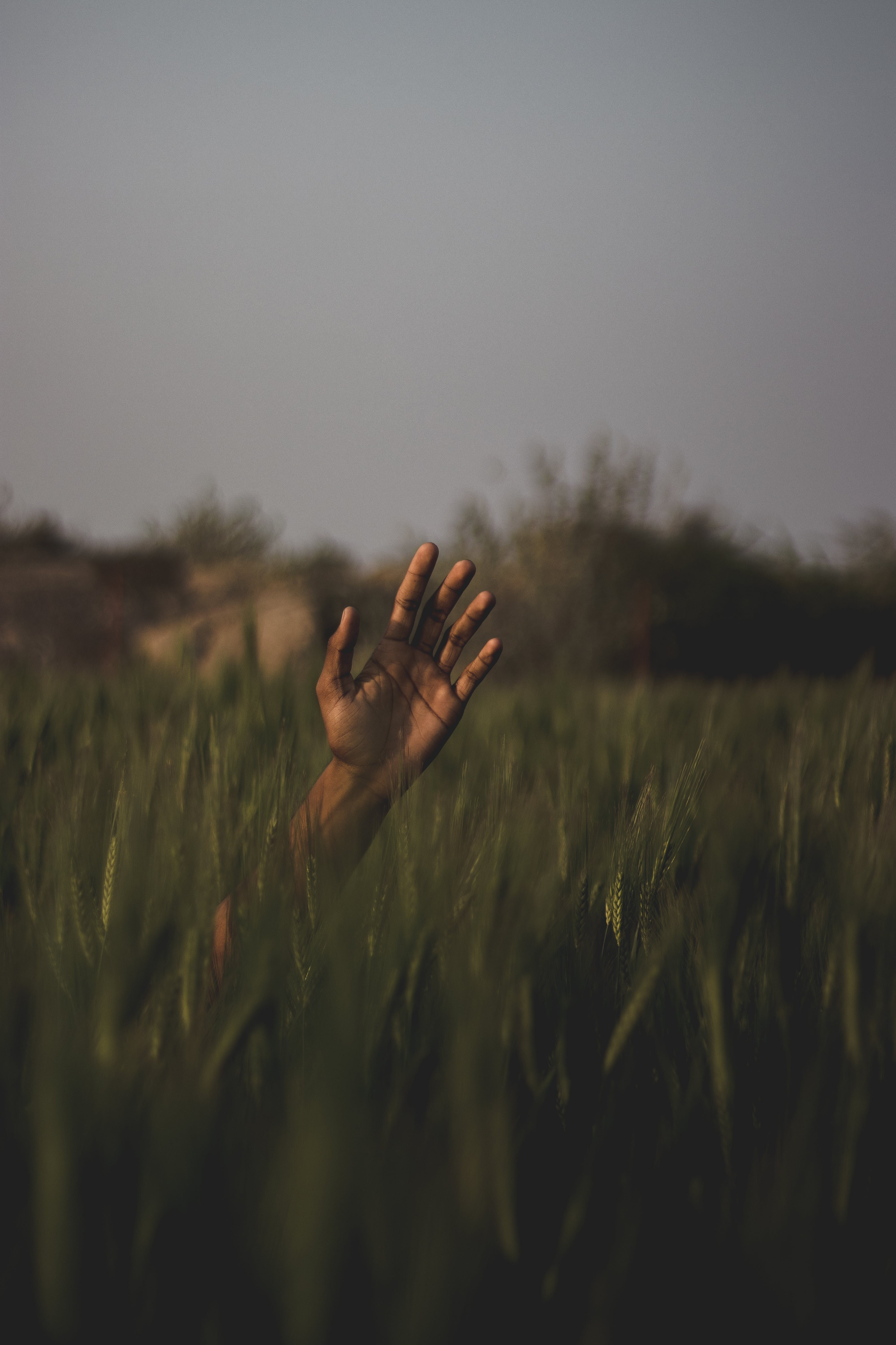 Person's Hand On Field